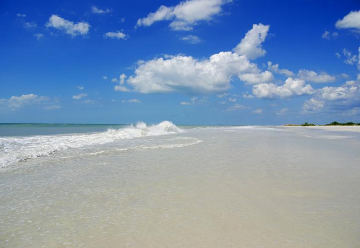 Honeymoon Island State Park Florida State Parks