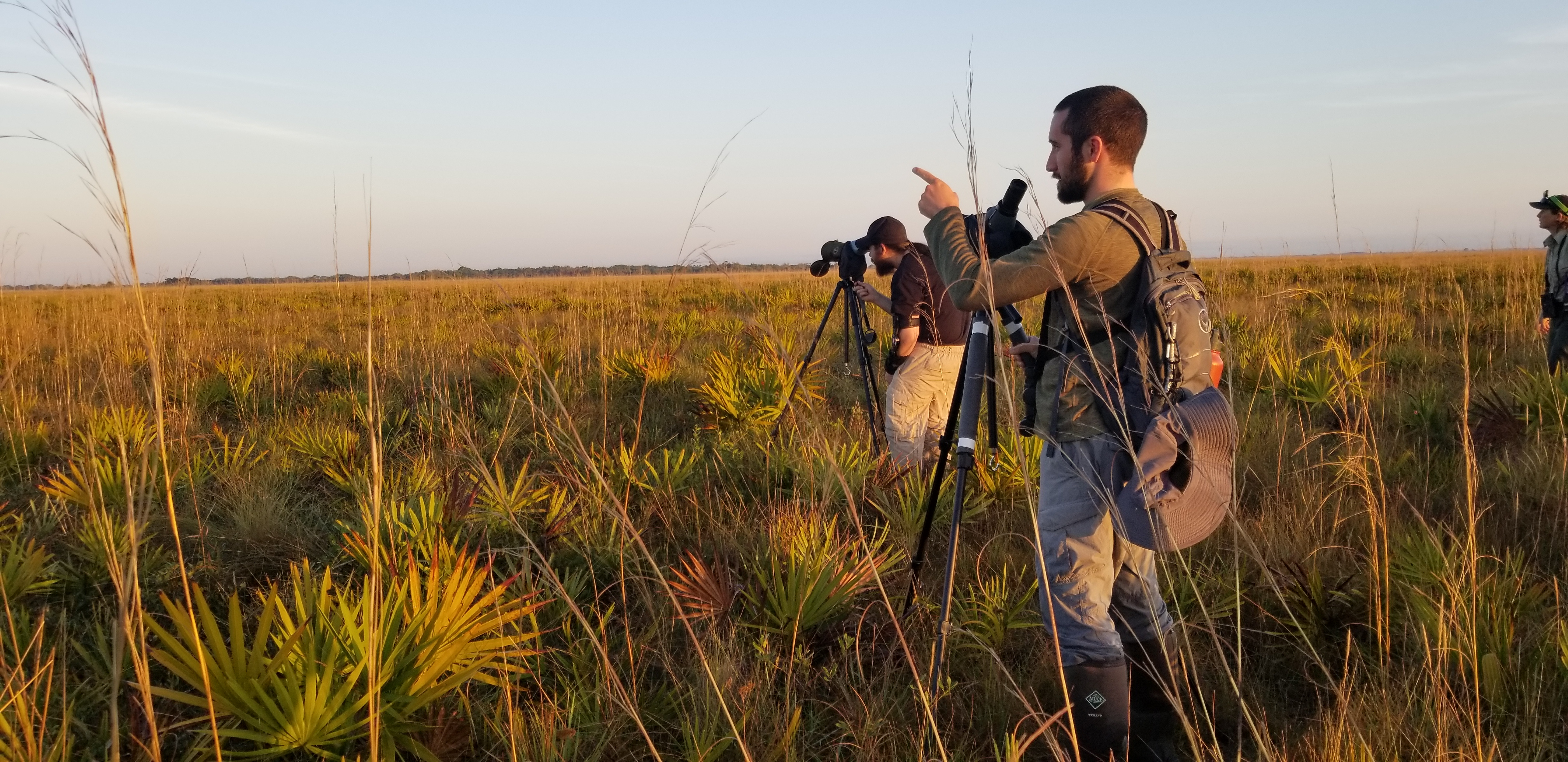 Grasshopper Sparrow staff looking for the Florida Grasshopper Sparrow