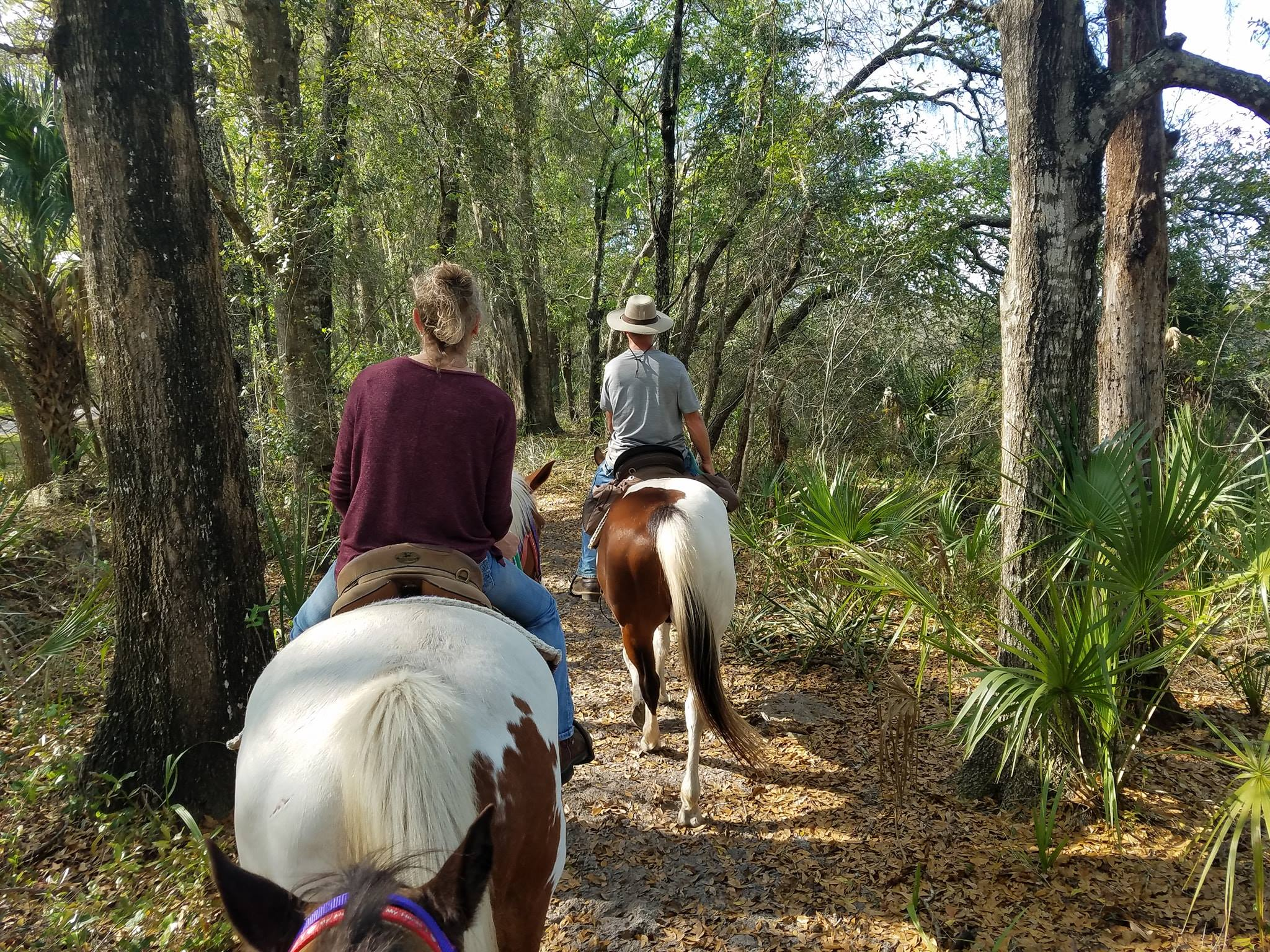 Horseback riding group riding through a wooded trail