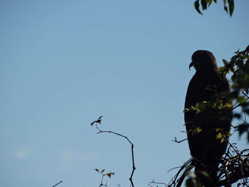 a bird sits on a branch silhouetted against a blue sky