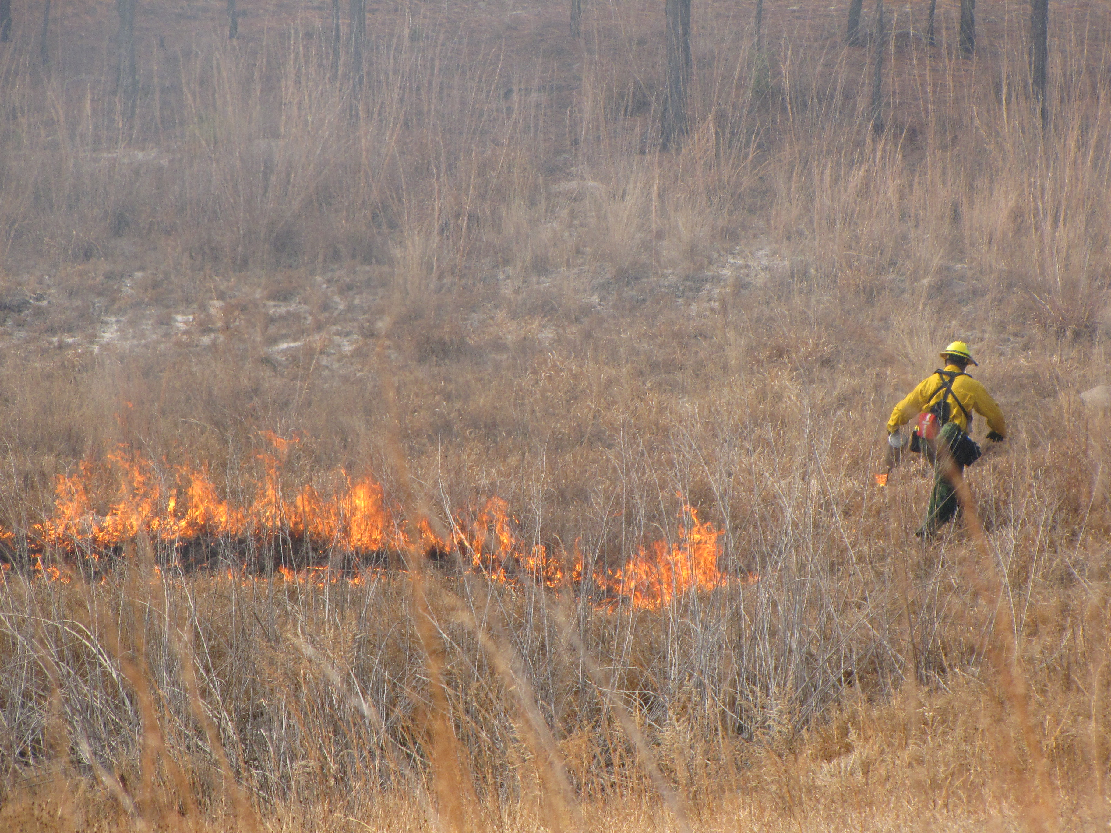 Fire crew igniting prairie with drip torch