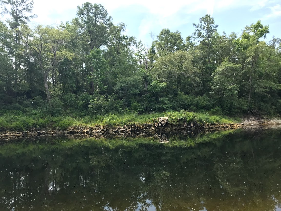 Limestone outcroppings on the Withlacoochee River