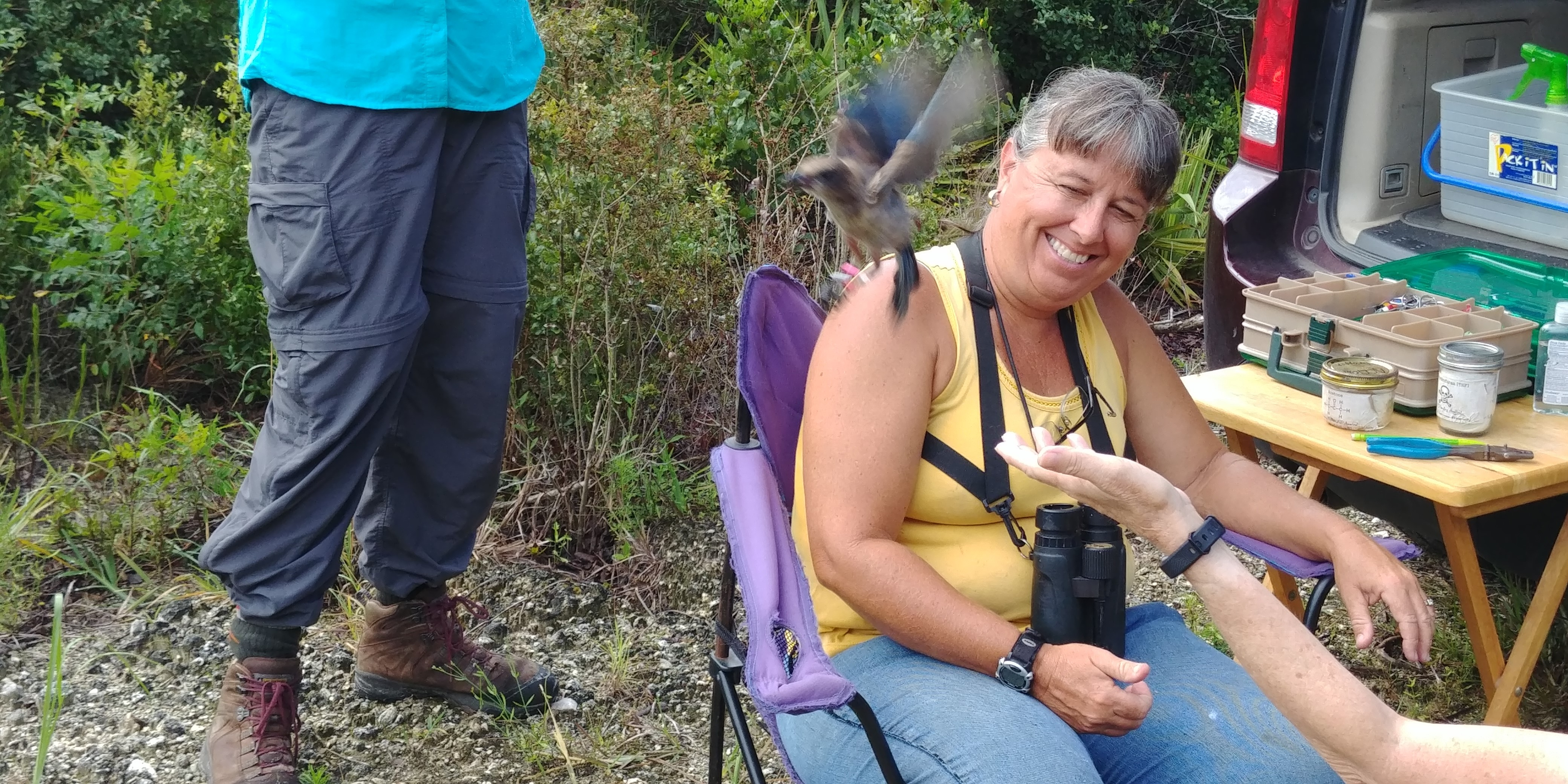 A Florida scrub-jay is released after being banded by Monica Folk.