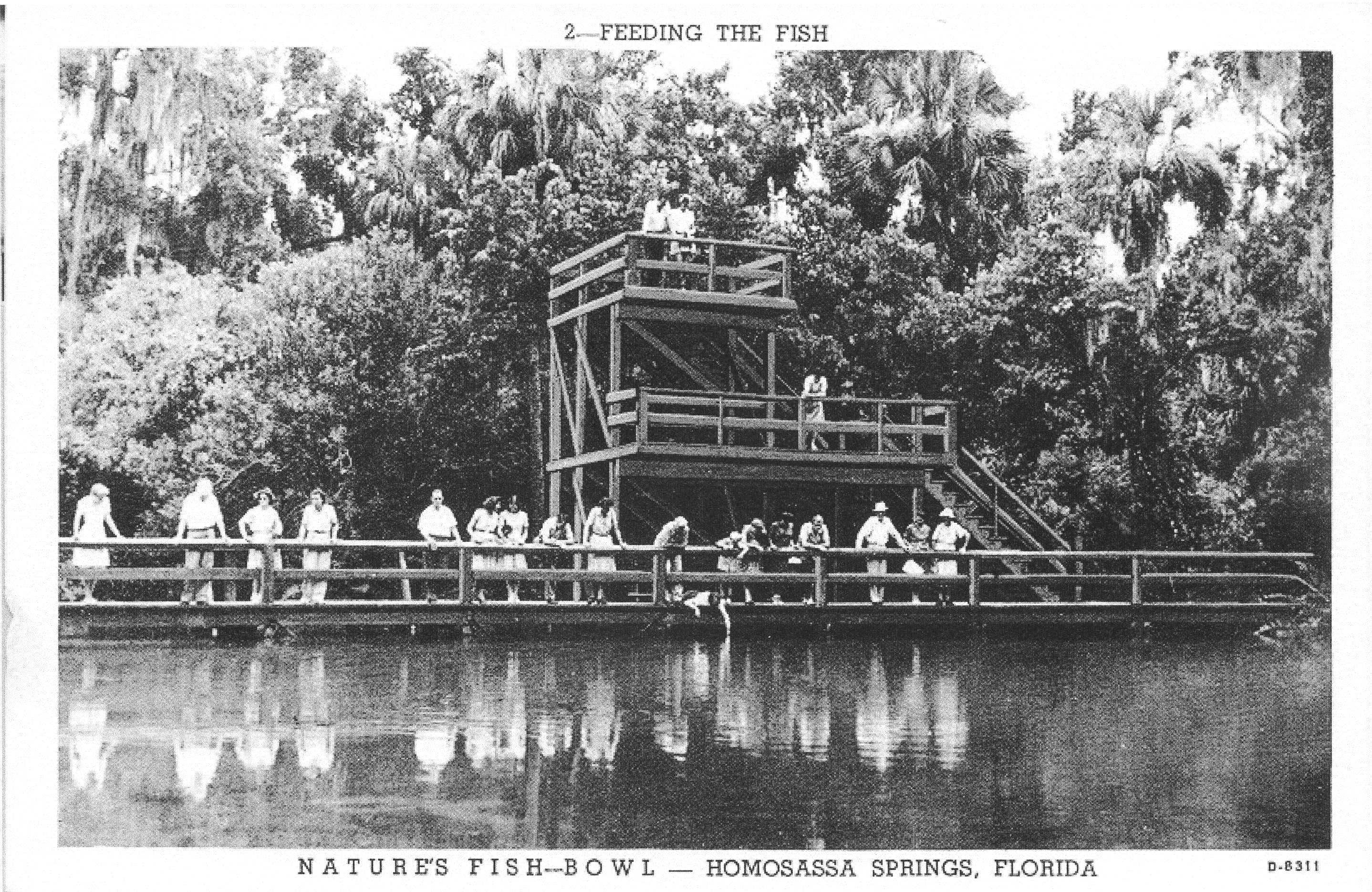 Image of antique postcard depicting visitors feeding fish at the underwater observatory at Homosassa Springs.