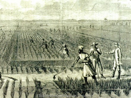 Slaves isolated 100 acres of marsh near the Tomoka River using water control structures for rice farming.
