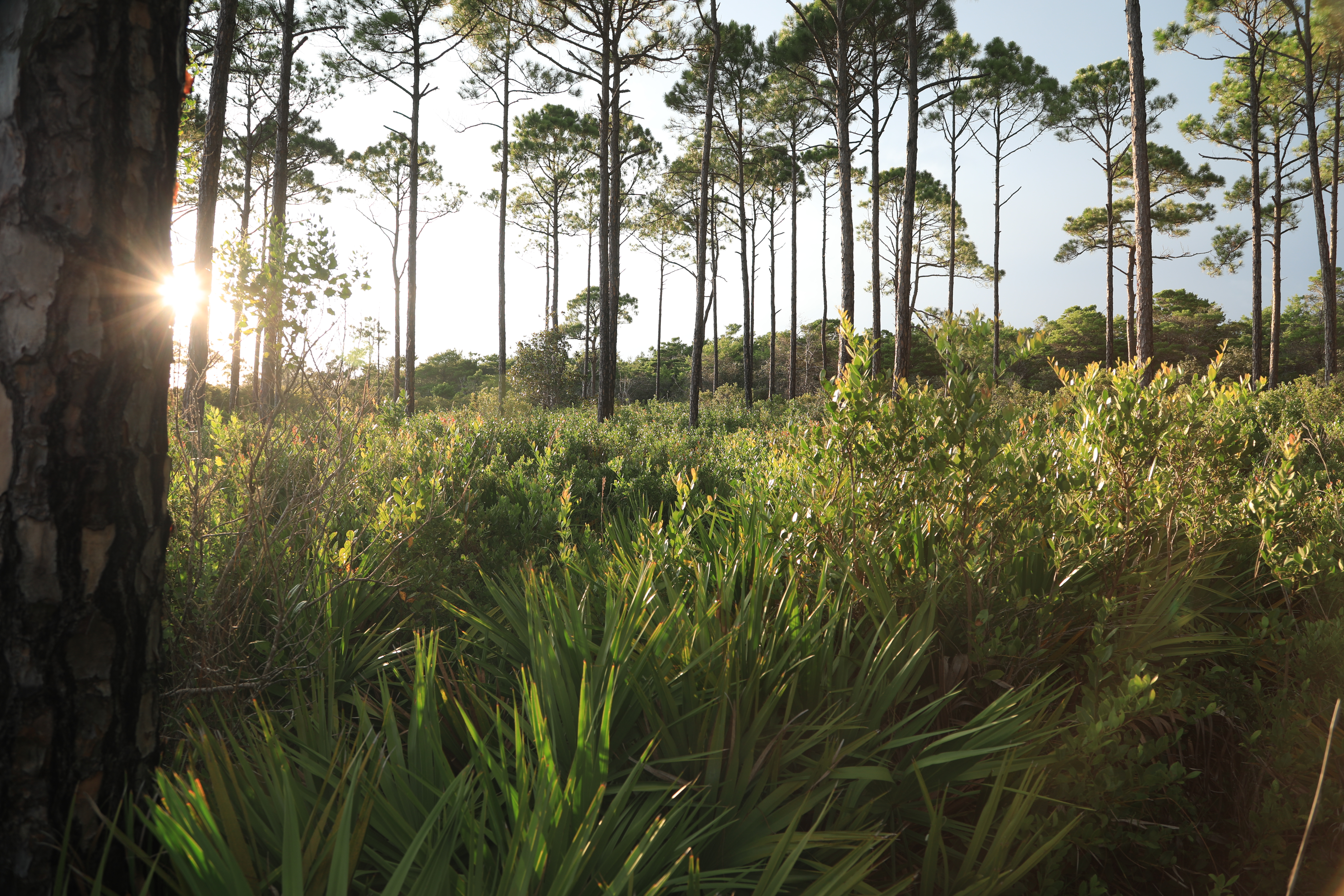Topsail Hill Preserve
