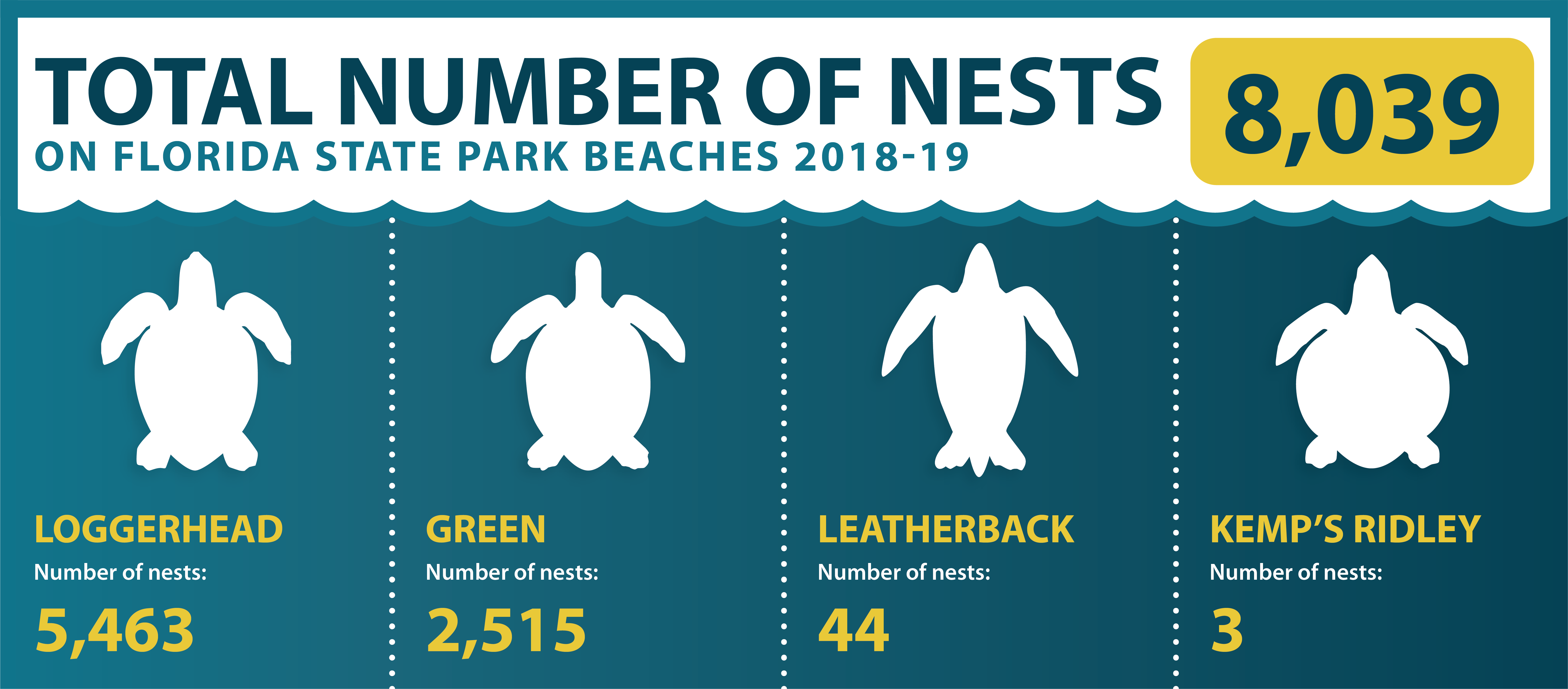A graphic showing the number of turtle nests on state park beaches 2018-19. 5463 loggerhead, 2515 green, 44 leatherback, 3 kemp's ridley.
