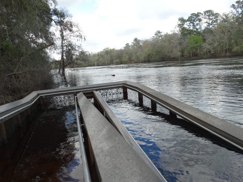 a boardwalk ramp submerged in flood water of the Suwannee River.