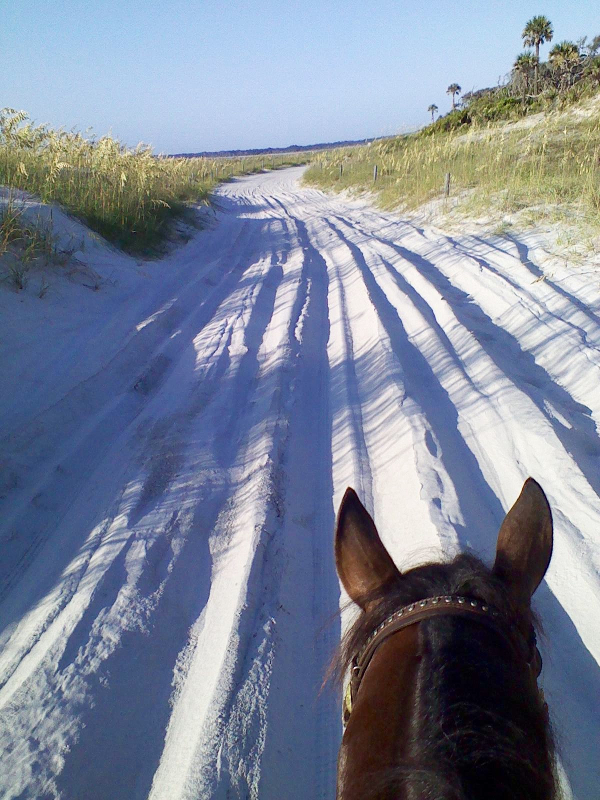 view from on top of a horse of a sandy trail leading towards a beach
