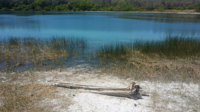 an old log at the edge of a lake with tall grasses and crystal blue water