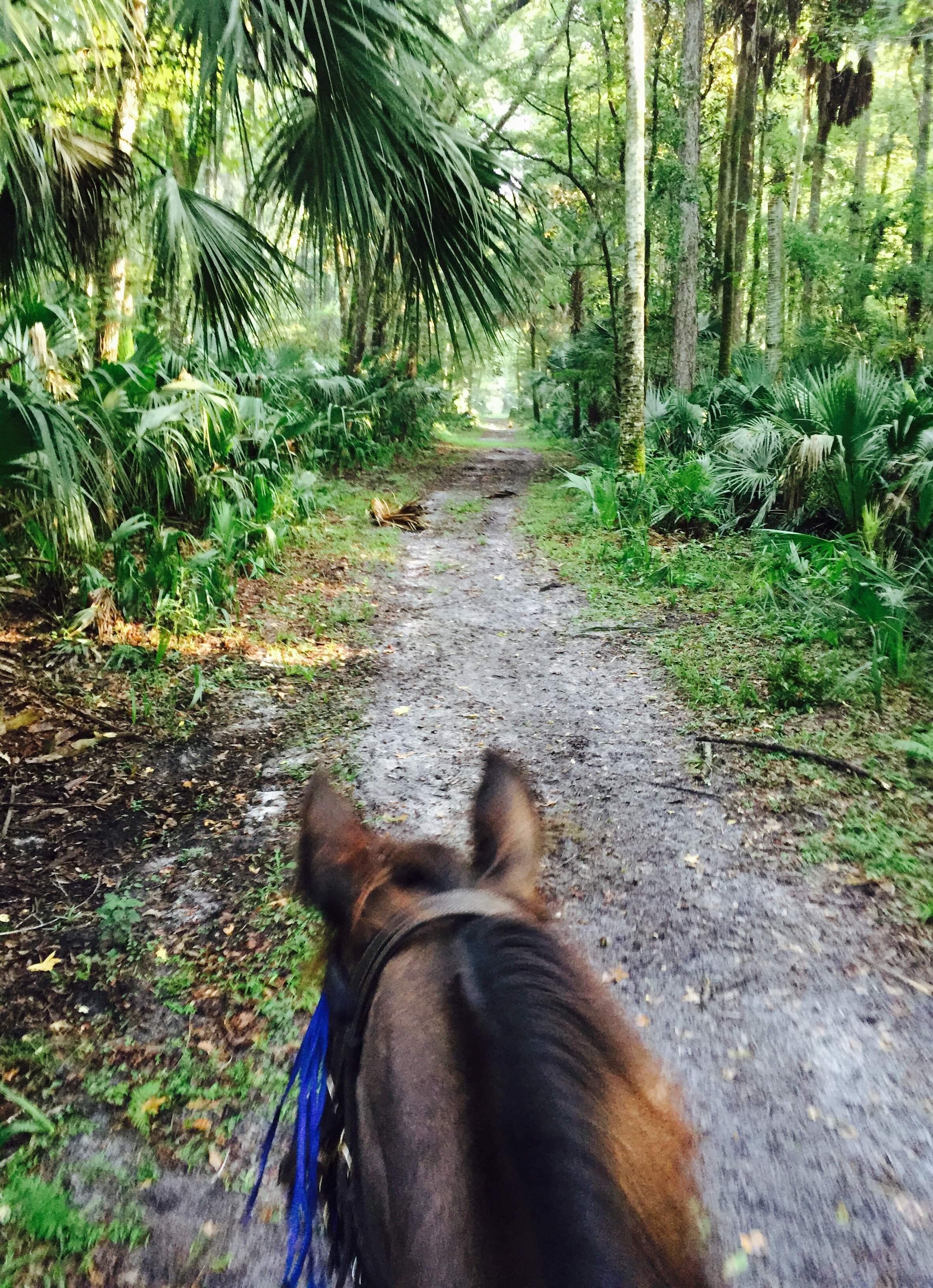 Horseback Riding At Fechtel Florida State Parks