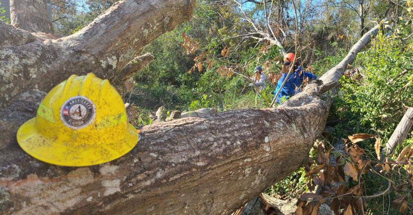 Two FLCC members use chainsaws to cut a water oak.
