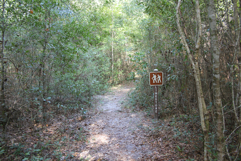 "a trail extends into the woods, with a brown sign that says ""limestone"""