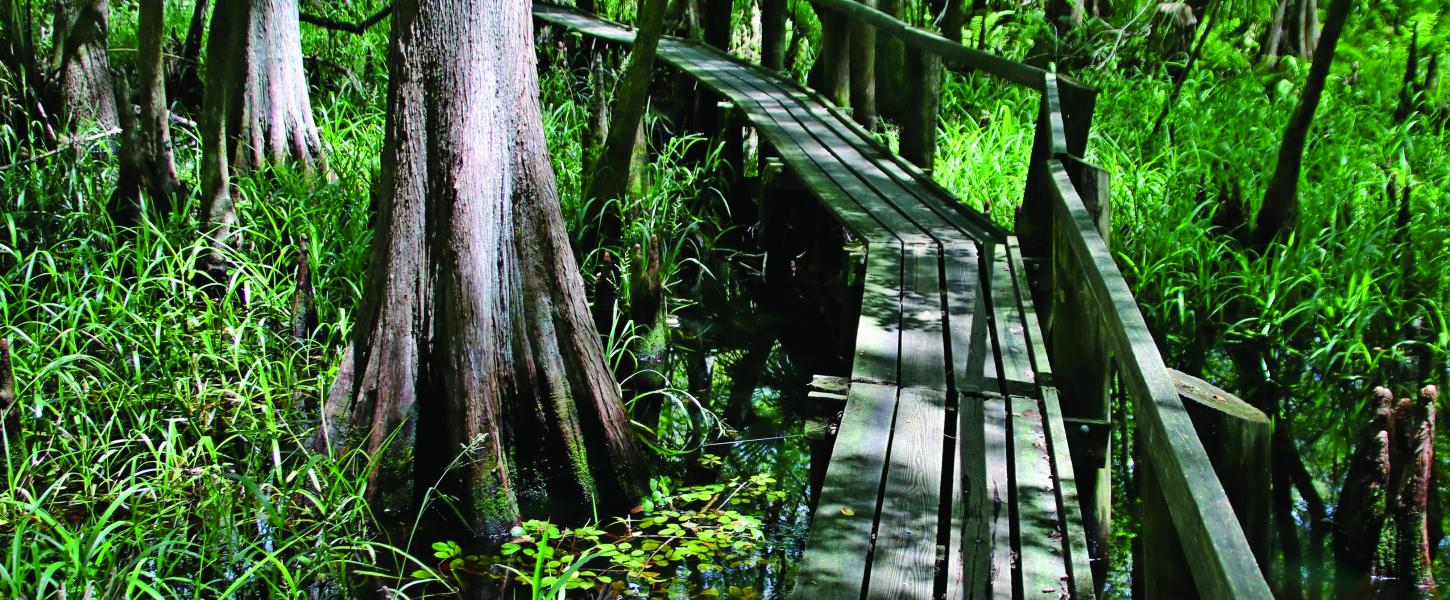 Highlands Hammock single-person boardwalk through the park