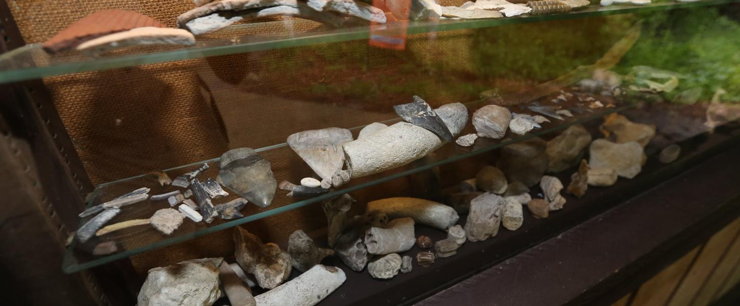 A glass case containing many fossils.