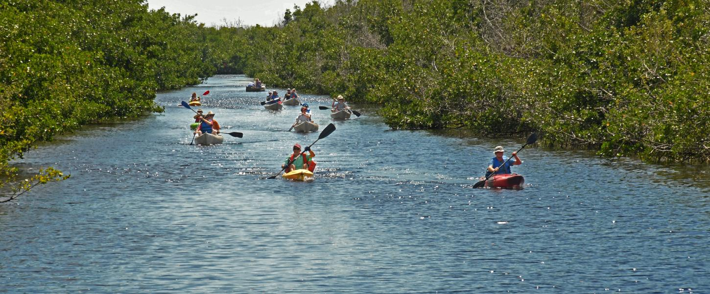 People paddling canoes on a river lined with mangroves.