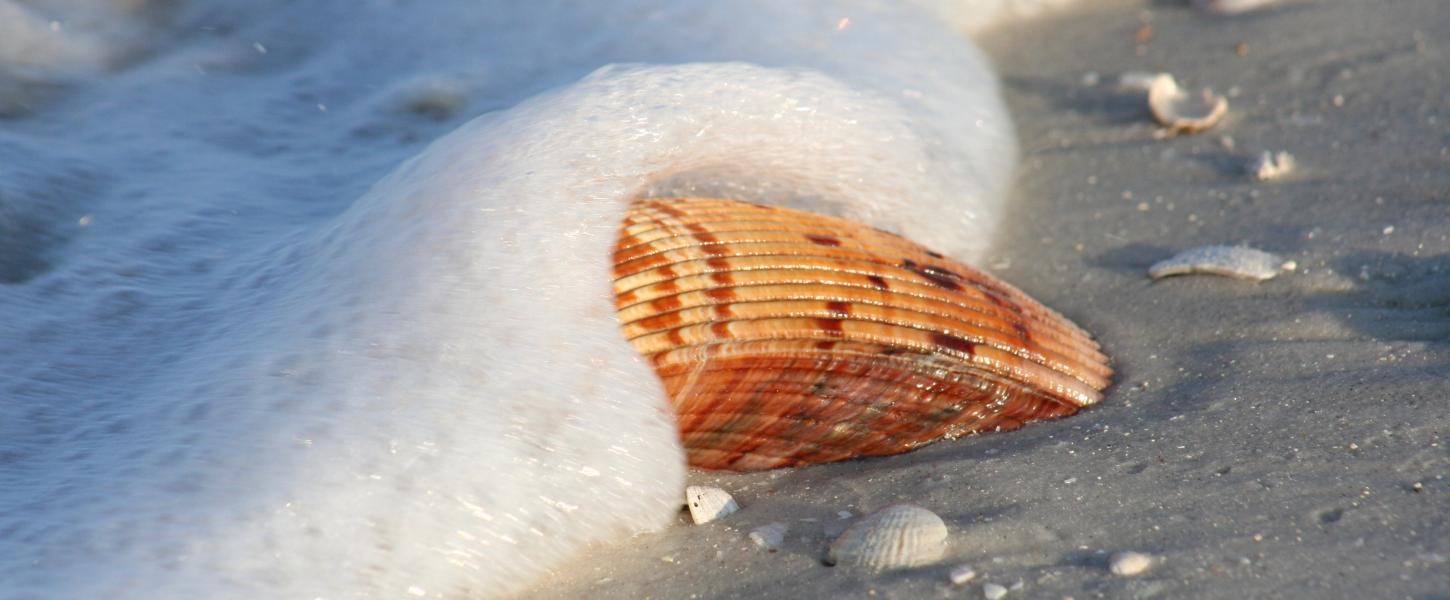 A picture of a shell being splashed by the water on the shore of the beach.