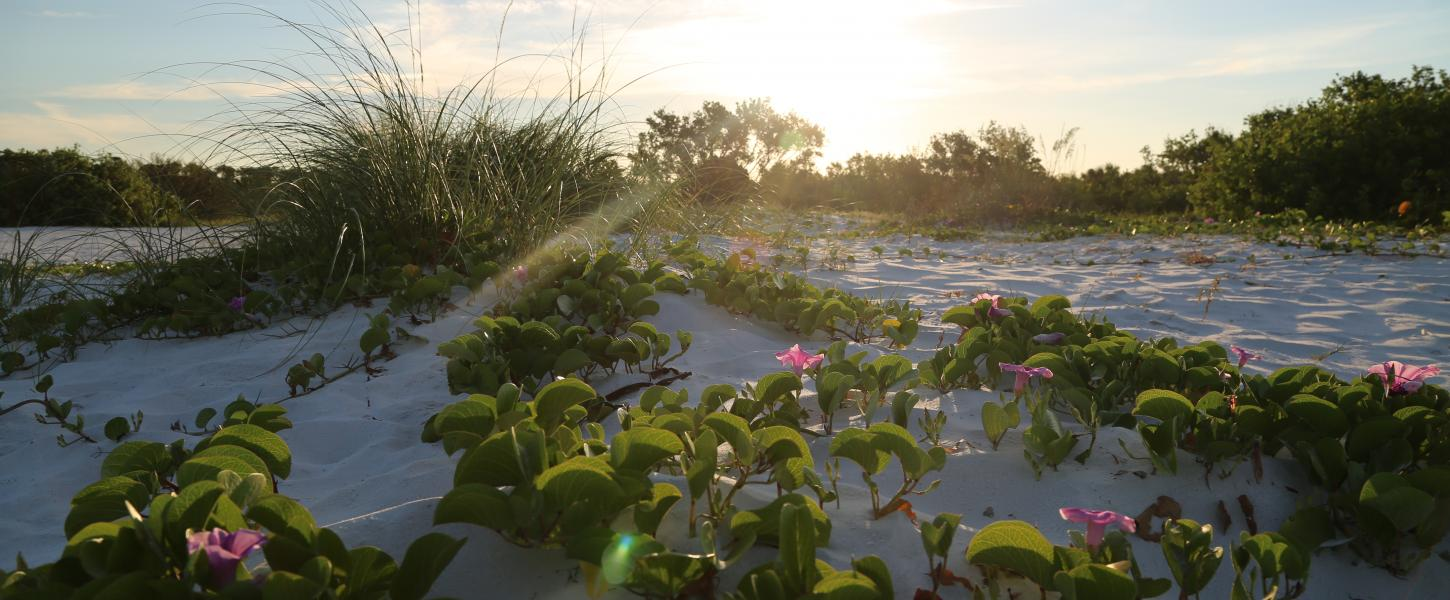 A view of flowers growing among the dunes at sunset.