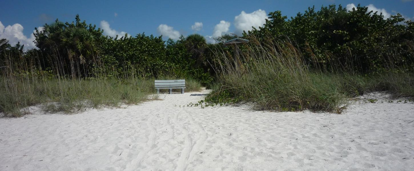 Beach showing sea oats, trees and a bench