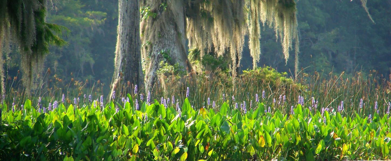 Edward Ball Wakulla Springs State Park | Florida State Parks
