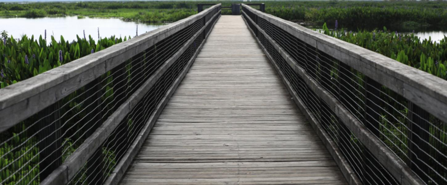 Image of boardwalk trail at paynes prairie preserve state park.