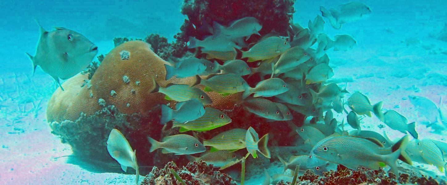 San Pedro Reef Fish