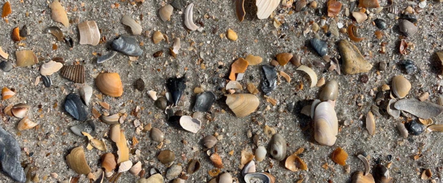 Multiple multicolored shells lay on the sand at fort clinch state park.