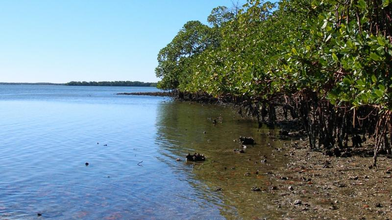 A view of the canoe launch at Mound Key.