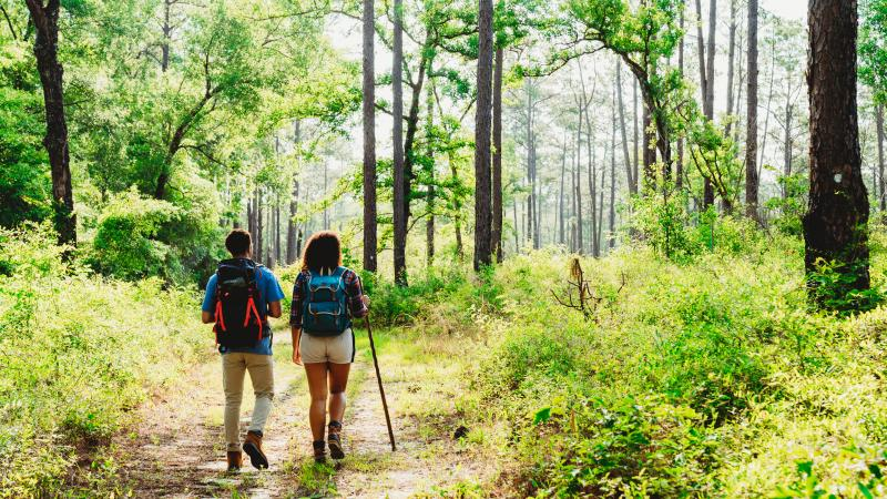 Two people with their back towards the camera on a hiking trail.