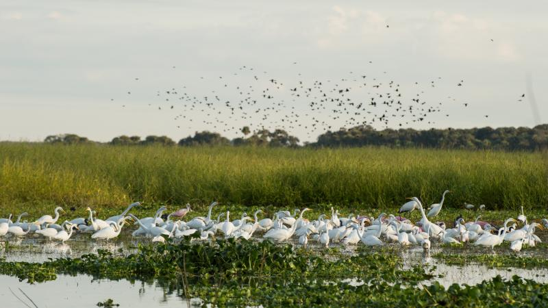 Many species of birds are nourished by the river and healthy prairie
