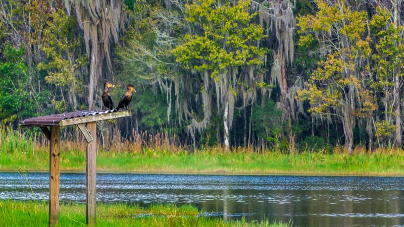 Two cormorants perched on a wooden post by the lake