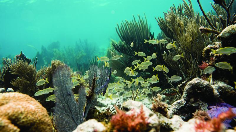 Coral Reef with Fish and other underwater sea creatures