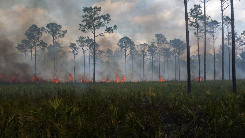 Prescribed Fire at Dunns Creek