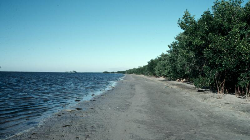 A view of the shoreline at Charlotte Harbor.