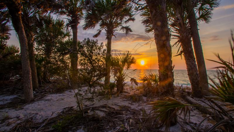 A view of the sunset between the trees at Cayo Costa.