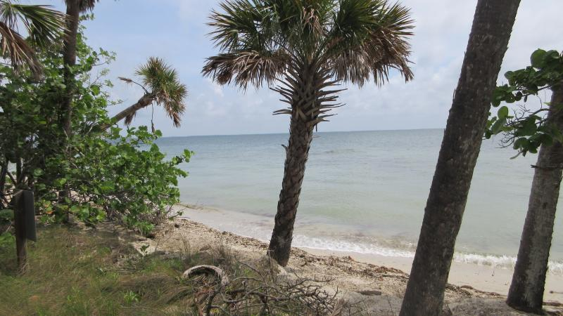 Beach with Palms on coastline