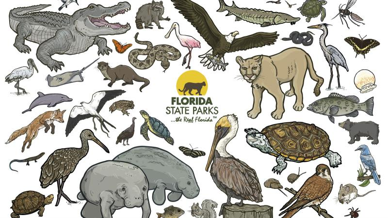 Composite image of Florida species