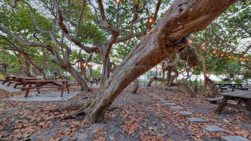 Large tree surrounding picnic tables