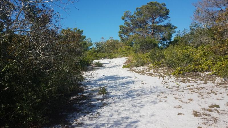 A white sandy trail winding under an open canopy of trees.