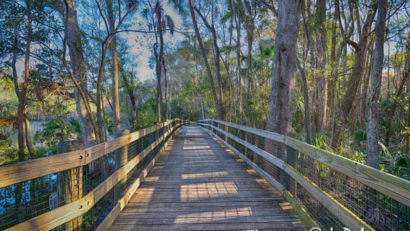 Image of the boardwalk at Homosassa Springs State Park surrounded by trees and water.