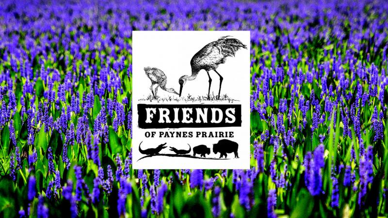 Friends of Paynes Prairie Preserve State Park