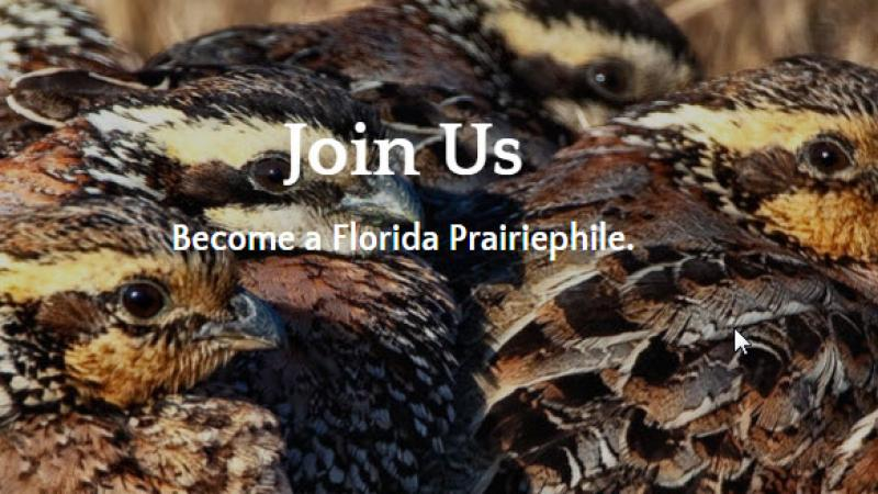 Friends of Kissimmee Prairie