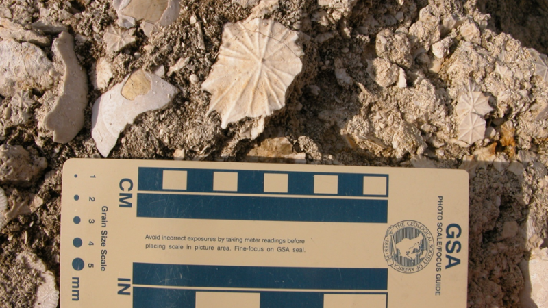 Fossils found at Florida Caverns State Park