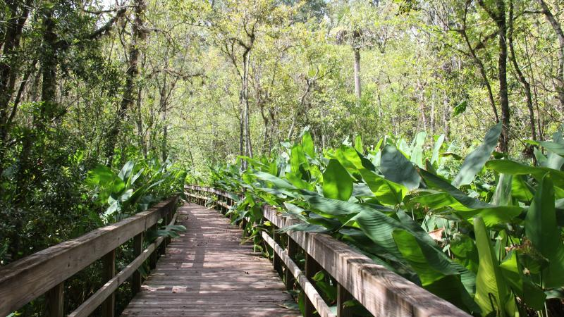 Friends of Highlands Hammock State Park