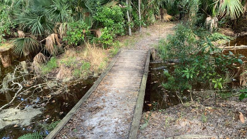 A bridge crosses a small creek, surrounded by saw palmettos and ferns.