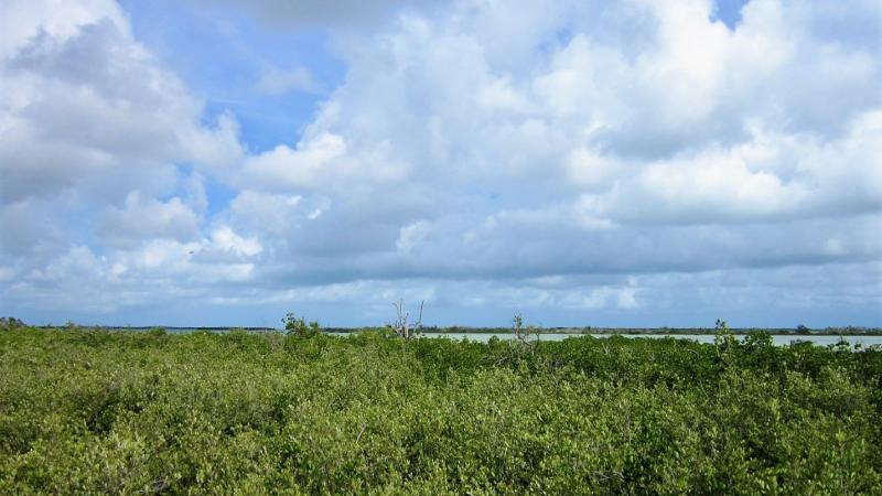 Lush mangroves lead out to blue sky
