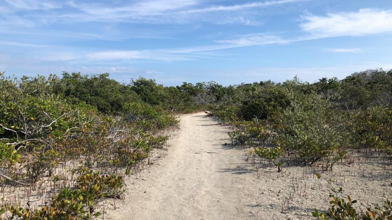 The keys tidal barren is an almost desert like habitat. Here in this photo there is a trail through shrubby landscape