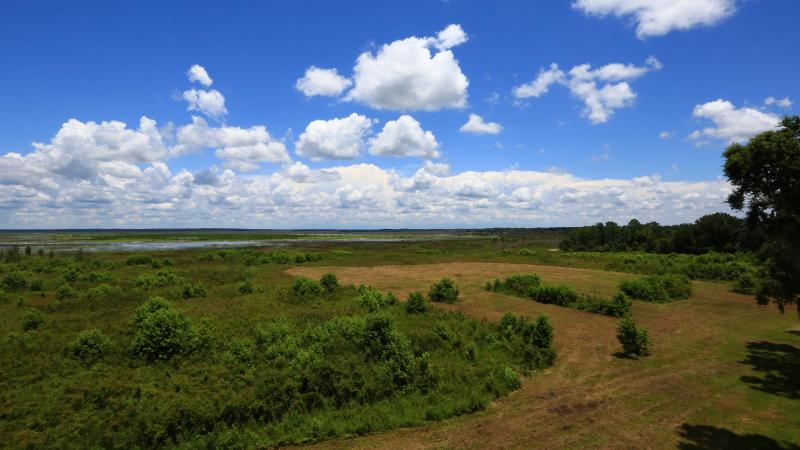 Paynes Prairie looking over Prarie