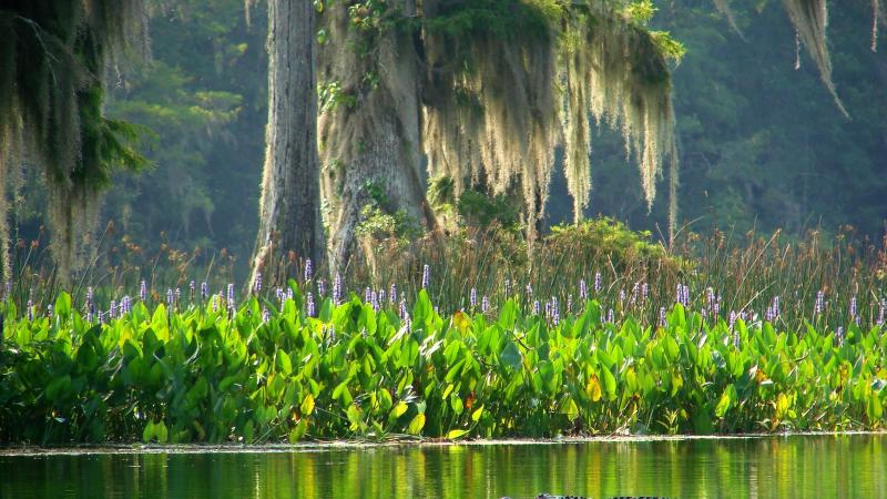 Wakulla Springs Wildlife