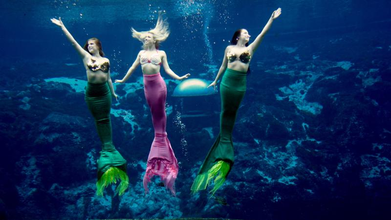 Mermaids at Weeki Wachee looking towards crowd and reaching their hands towards the surface